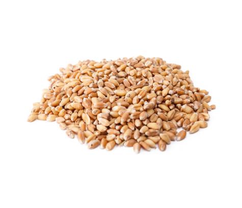 grains_1518090225-c8a74d4693abe1d7fdc3d9332e2ba08a.jpg